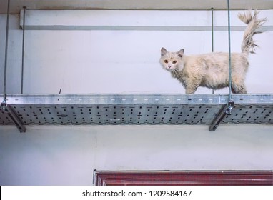 Sleazy dirty stray cat in utility room on top