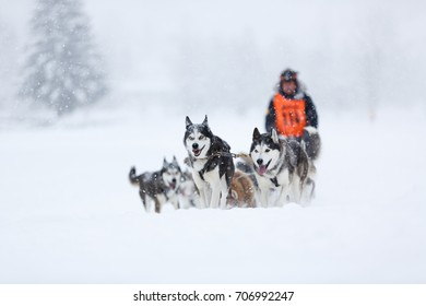 Sledding with husky dogs in Austrian alps