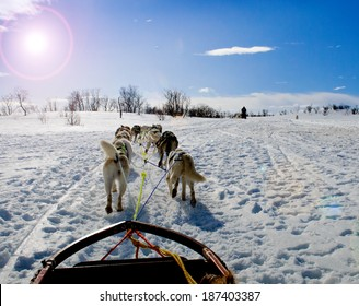 sledding with husky dogs in lNorway