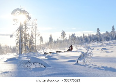 sledge in Lapland