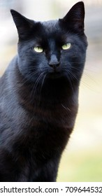 A sleek, black cat is looking straight into the camera.  Her eyes are bright yellow-green. Her alert ears are up and forward.  A  blurred background is patches of pale blue, yellow, green and blue.