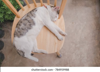 Sleep cat on wooden chair