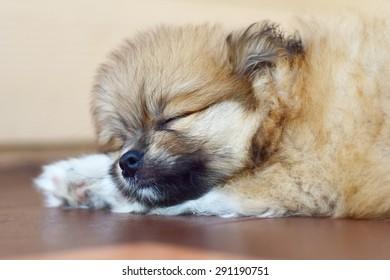 Sleep dog black and white tone, Classical sleep dog