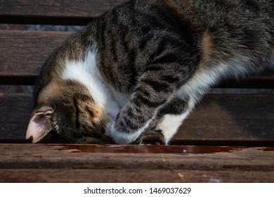 Sleeper cute cat on the bench