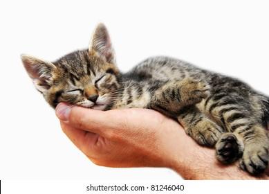 sleeping baby cat on hand