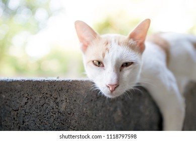 Sleeping cat cat