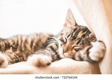 Sleeping cat background