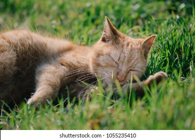 Sleeping cat. Cute cat relaxing in grass.
