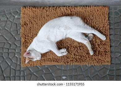 sleeping cat of the day