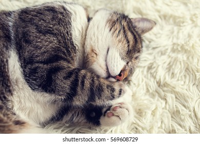 Sleeping cat.Cat dreaming,closed eyes isolated on white background.