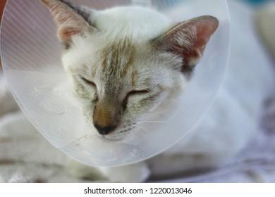 sleeping cat with Elizabeth collar (e-collar)