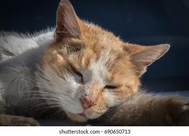 Sleeping cat hunting home