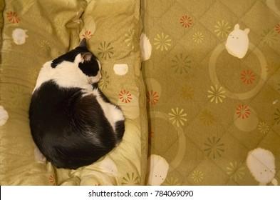 Sleeping cat and Kotatsu