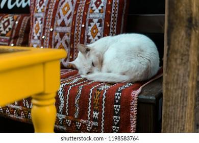 A SLEEPING CAT IN OLD MEDINA,FEZ-MOROCCO