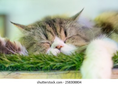 A Sleeping Cat on the grass