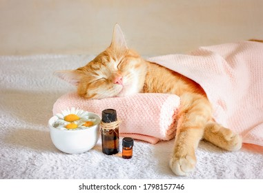 Sleeping cat on a massage towel. Also in the foreground is a bottles of aromatic oil  and chamomile flowers. Concept: massage, aromatherapy, body care.