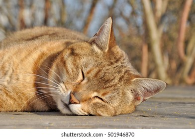 Sleeping Cat on the patio in the warm evening light