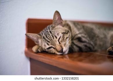 Sleeping cat on steps - Shutterstock ID 1332158201