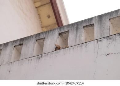 sleeping cat on the wall