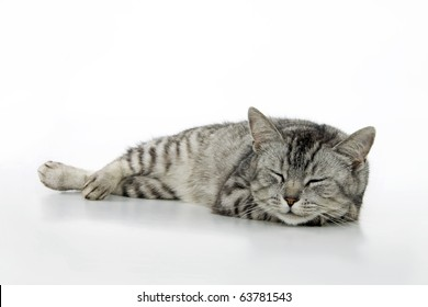 Sleeping cat, on white background.