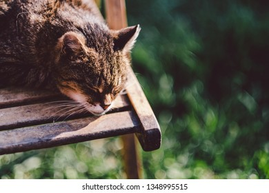 Sleeping cat outdoors