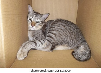 Sleeping cat in a paper box