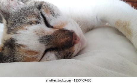Sleeping cats so cute