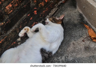 Sleeping cats,breastfed,Black and white cat