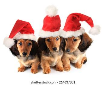 Sleeping Christmas puppy wearing a Santa hat.