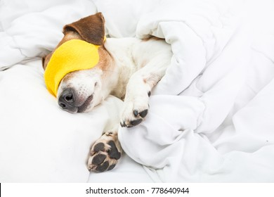 Sleeping cozy dog in white bed and yellow sleeping mask