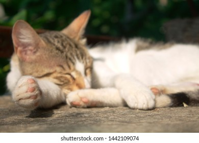 sleeping, cute cat outdoor, photo focused on cat's paw, pets and animals, cute and beautiful