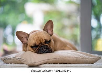 Sleeping cute Frech Bulldog on brown mat indoor.