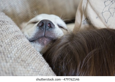 Sleeping Dog with black nose is snoring in his bed with his head on a people's head