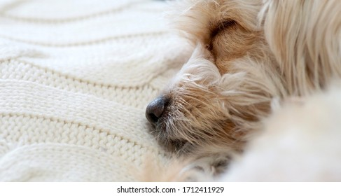 Sleeping dog close up with copy space