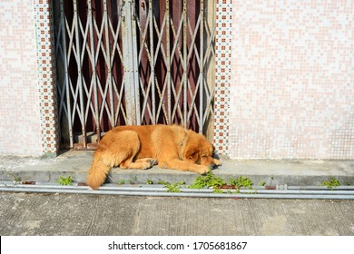 Sleeping dog in front of metal gate in the countryside