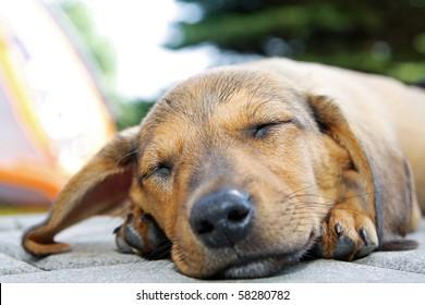 Sleeping dog laying on the floor