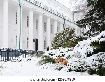 Sleeping dog on old ukrainian university named by Gogol