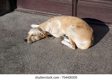 Sleeping Dog in the sun