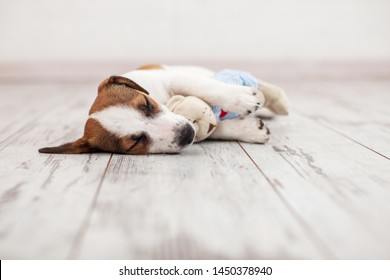 Sleeping dog with toy at home. Puppy sleep on flopr