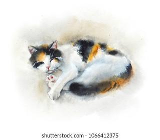 Sleeping domestic cat. Watercolor hand drawn illustration