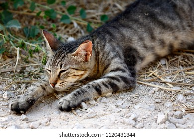 Sleeping feral striped cat in the countryside. Photography of nature and wildlife.