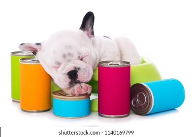 Sleeping french bulldog puppy with canned food isolated on white