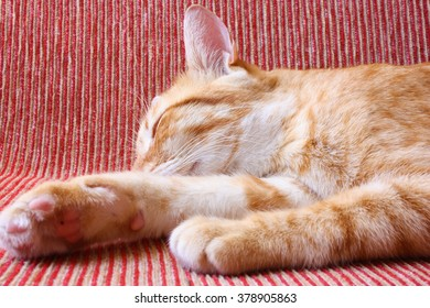 Sleeping ginger cat on a sofa.