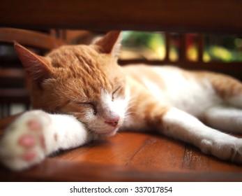 Sleeping Ginger Tom Cat