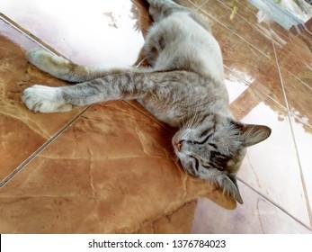 Sleeping ginger tomcat - perfect dream