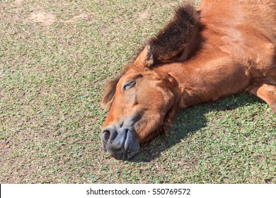 sleeping horse on  grass in sunlight