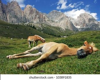 Sleeping horse, Val Gardena, Dolomite, Italy