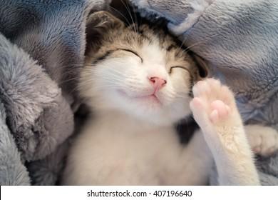 Sleeping kitten on blanket