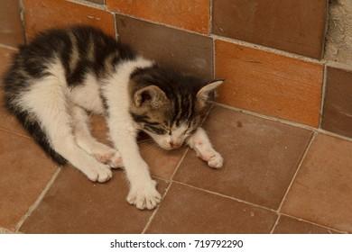 Sleeping kitten on tile floor