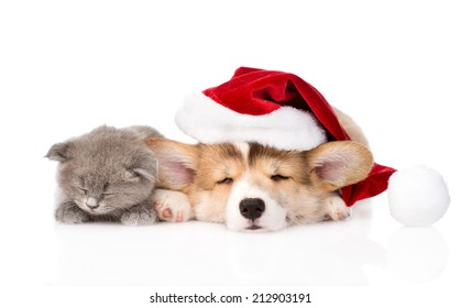 sleeping kitten and Pembroke Welsh Corgi puppy with santa hat. isolated on white background